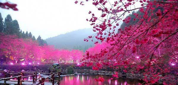 Η εκπληκτική λίμνη με τις κερασιές!