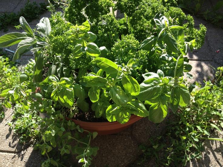 Fines herbes fraîches !