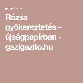 Rózsa gyökereztetés - újságpapírban - gazigazito.hu