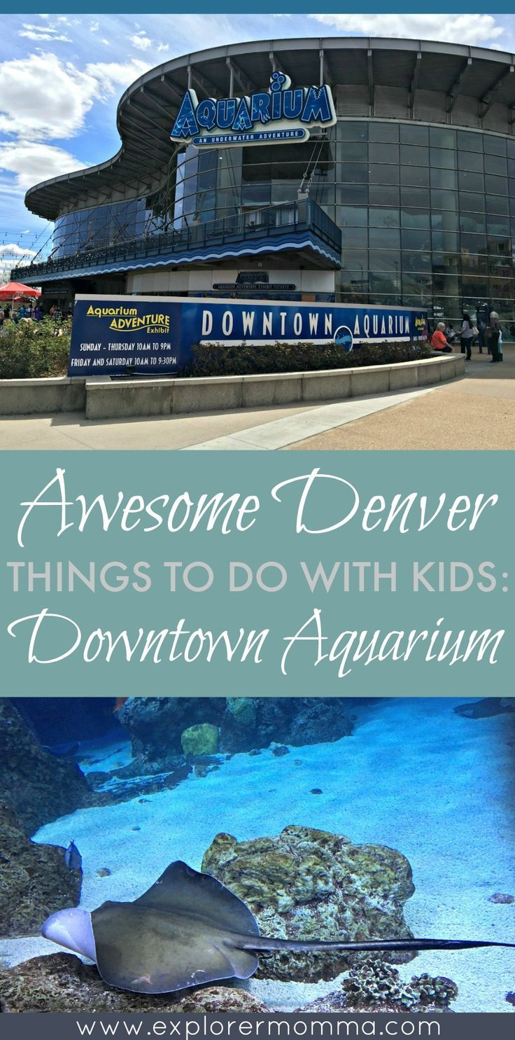 Looking for Denver things to do with kids? Explore the Downtown Aquarium and get some tips from our trip here!
