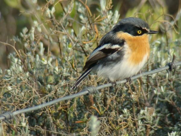 There are over 180 species of birds recorded on the farm. To make the most of your visit we can advise you on the best trails at Meijer's Rust - De Rust, Western Cape Photo: Provided