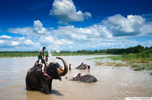 Viaje a Nepal con niños.  Baño con elefantes en Nepal