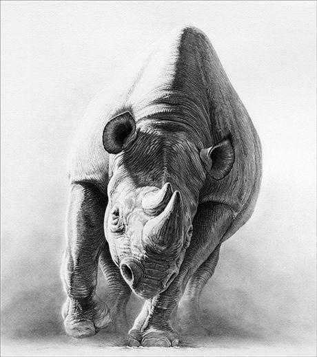 Line Drawing Rhinoceros : Ideas about rhino tattoo on pinterest black