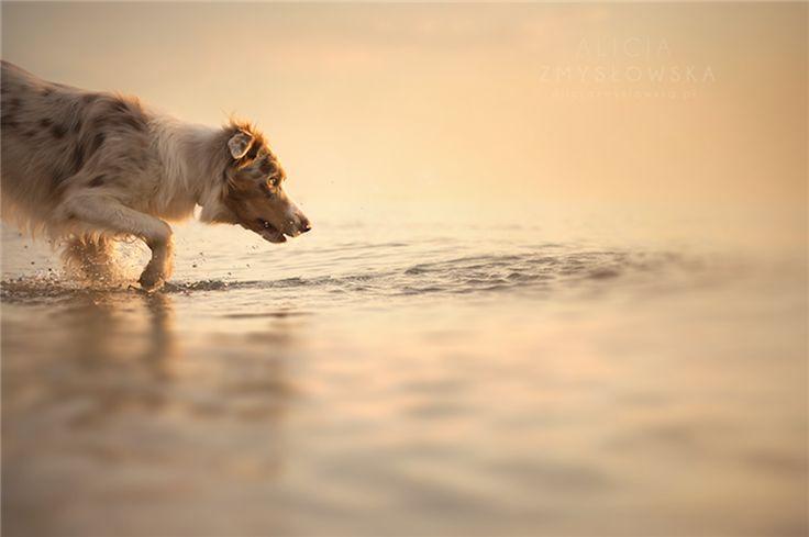 dog-wet