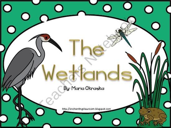 The Wetland Habitat Mini Unit from Mrs. Okraska's Enchanting Resources on TeachersNotebook.com -  (30 pages)  - This is a mini unit about the Wetland Habitat