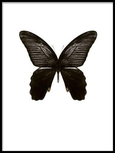 Black Butterfly, poster. Snygg tavla med fjäril. Snygg tavla med fjäril med mycket svärta. Riktigt vacker art print som förhöjer känslan i rummet, samtidigt som den är lätt att matcha med sin stilrena design.