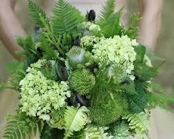 groene hortensia - Google zoeken
