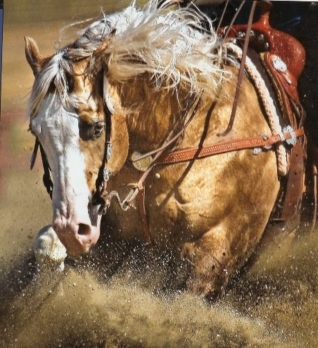 Big Chex to Cash - This photo first appeared on the July 15, 2007, cover of Quarter Horse News. Beautiful shot by John O'Hara.