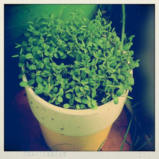 Wildflower seedlings.
