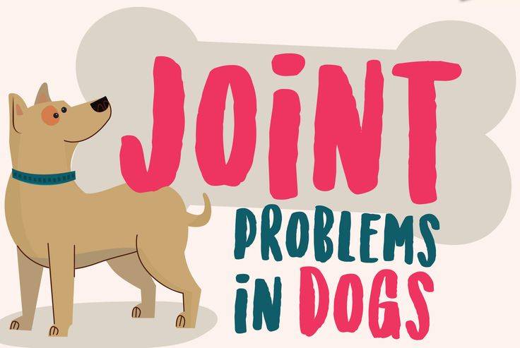 Joint problems in dogs  Most of us dog owners have, many a time, watched our older dogs slowly become less mobile as joint problems set in. By focusing on the right exercise, diet and supplementation programme, you can do a lot to relieve your best friend's pain and discomfort.By using Allopathic treatment or Natural treatment, you will be able to treat your dog's pain.