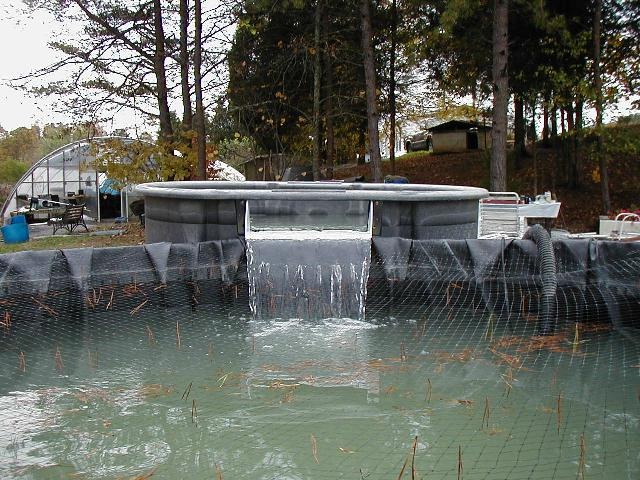 Diy stock tank waterfall filter outdoor ideas for Koi pond size requirements