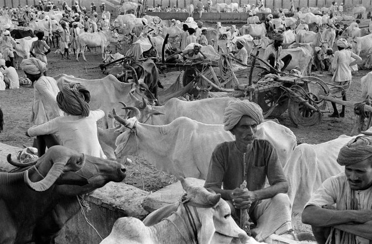 Henri Cartier-Bresson. People and their cattle. Jaipur, India, 1947