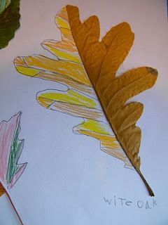 This is a great lesson because it integrates science with art in a very cool way. This lesson also helps students learn about texture and color. This also reminded me a lot of what we did in class because they used leaves.
