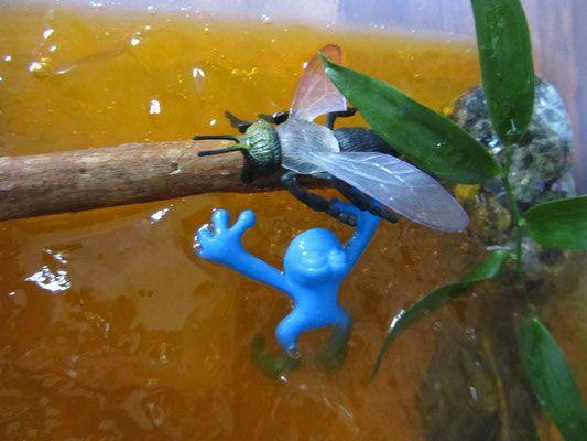 Atak żaby na muchę!