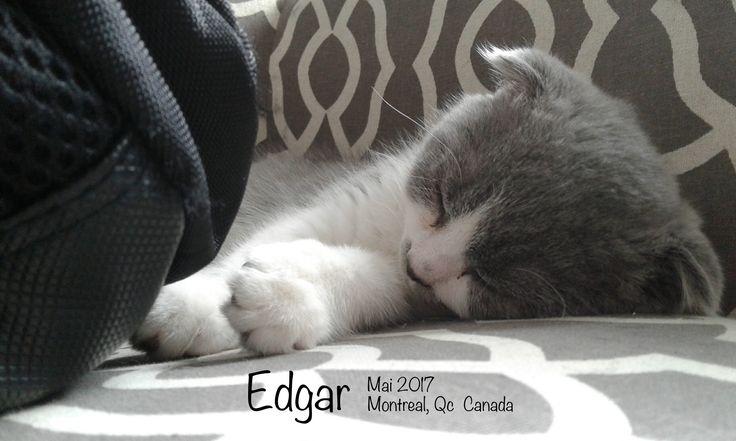 Edgar - mai 2017_ Montréal, Qc (Canada)