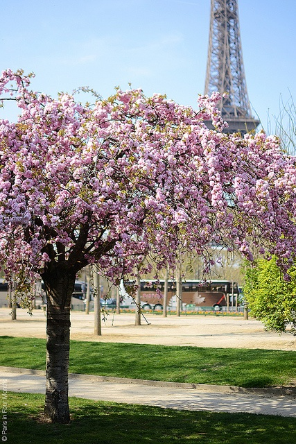 Pink blossom by Paris in Four Months, via Flickr