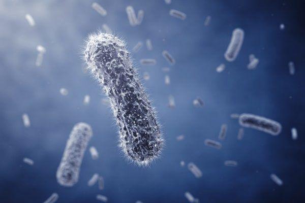 Syndrome de fatigue chronique lié à des différences dans les bactéries intestinales