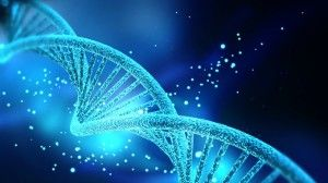 The Morphogenetic Field & The Future of DNA