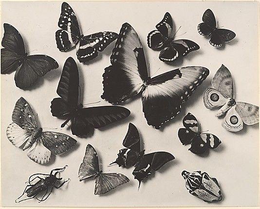 [Butterflies] Man Ray (American, Philadelphia, Pennsylvania 1890–1976 Paris) Date: ca. 1930
