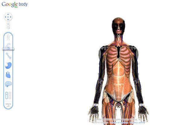 interactive anatomy