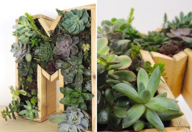 Vidéo : Fabrication d'un tableau végétal de plantes grasses déco et original !