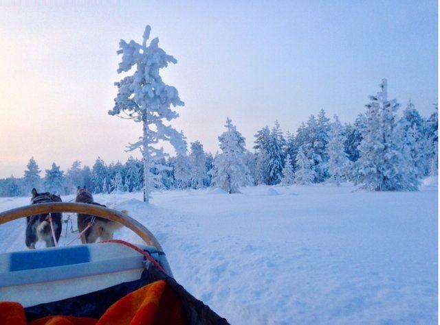 Las mejores excursiones en Laponia con niños