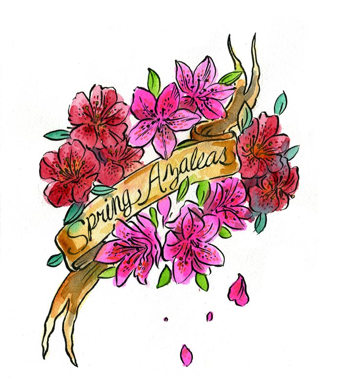 Azaleas.jpg (698×800)