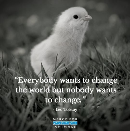 #Inspiration.Be the change and go #veg; that's the compassionate choice. www.ChooseVeg.in