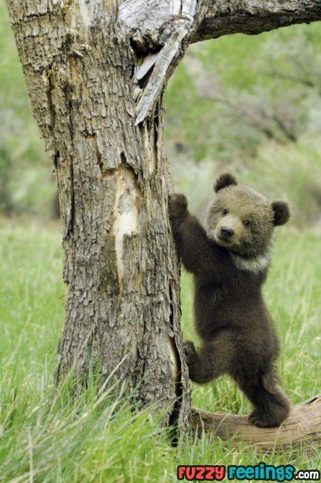 cub ready to climb a tree
