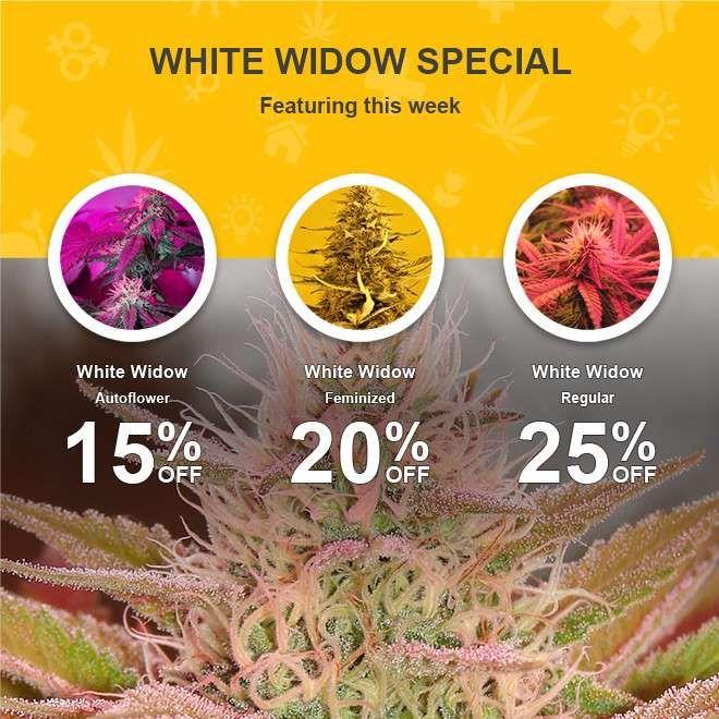 Nirvana® oferece sementes de qualidade Maconha diretamente da fonte! Comprar sementes de maconha com melhor genética! Discreto transporte mundial