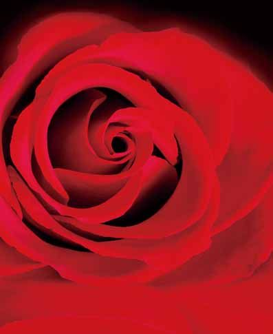 3Feet-5Feet Rose Flowers Backgrounds Photography Backdrops Vinyl Backdrops For Photography Baby Newborn Backdrops Props.  If want it,please click here    https://www.wish.com/c/56fdd1979089346c83d18b01