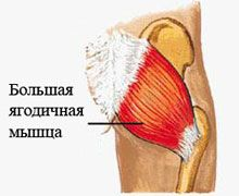 Большая ягодичная мышцаольшая ягодичная мышца имеет ромбовидную форму, самая крупная и сильная из всех ягодичных мышц. Размер ягодиц в основном определяется именно её размером. Удерживает туловище в вертикальном положении, позволяет крутить бедром и разворачивать его кнаружи.