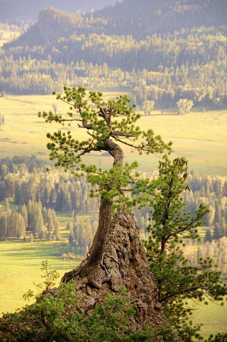 beautiful: Creek Pass, Beautiful Places, Pass Bonsai, Trees, Wolves, Natural, Colorado Photos, Pass Colorado, Wolf Creek