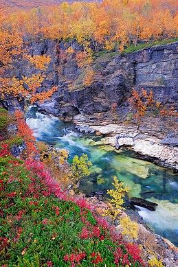 autumn scenery in the Abisko-Canyon with Abiskojakka River, Sweden, Lapland, Abisko National Park, Norrbotten.