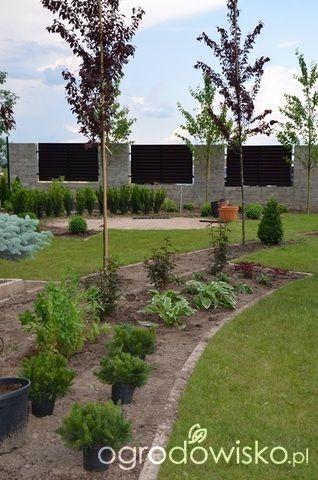 Jak zamienić glinę w wymarzony skrawek Ziemi. - strona 132 - Forum ogrodnicze - Ogrodowisko