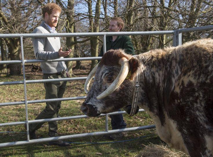 Prince Harry Focuses on Charity Work Amid James Hewitt Paternity Rumors