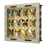 Miho Unexpected Things: Butterflies - Want to come up? $87.90