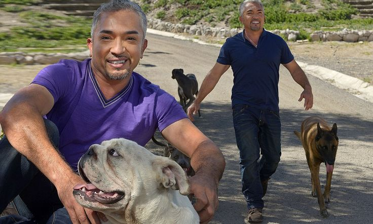Dog Whisperer Cesar Millan with Daddy and Junior. Daddy was 16 years when he passed away. He was Cesar's special close dog.