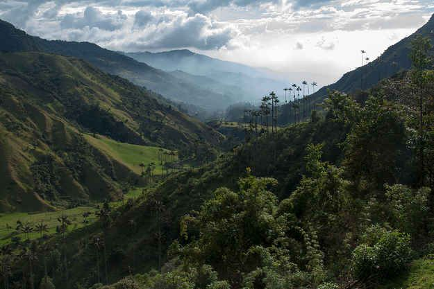 Cocora Valley, Colombia. | 26 Breathtaking Places In Latin America You Should Visit This Year