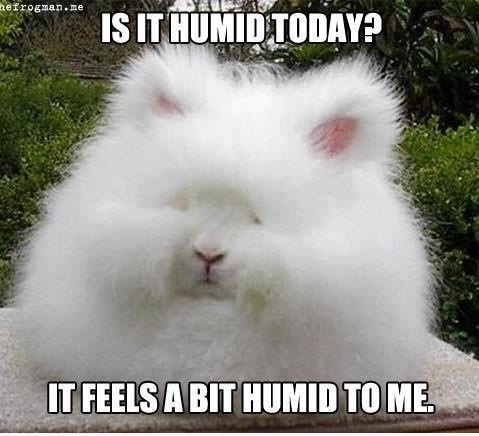Is it humid today ?