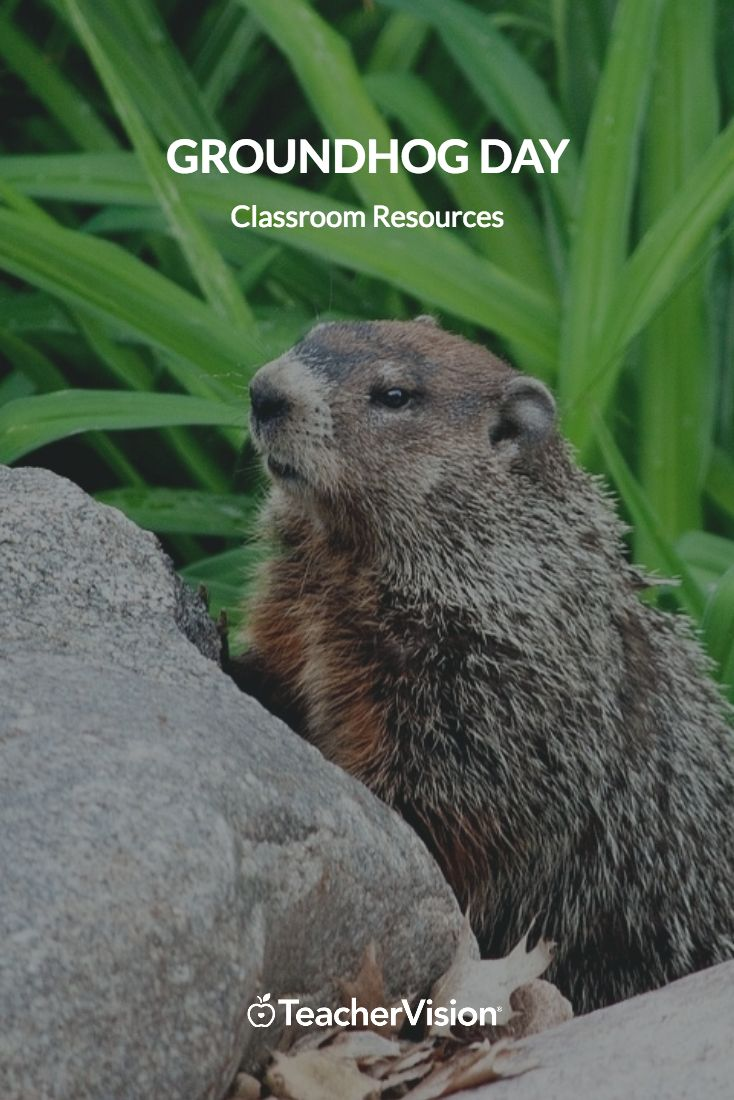 Get ready for Punxsutawney Phil with these Groundhog Day classroom resources!