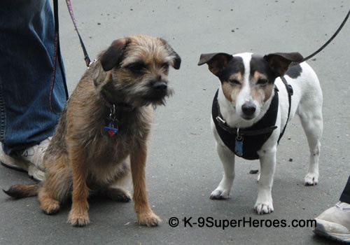 Do you think were done walking for the day? I'm about to fall asleep standing up. http://www.K-9SuperHeroes.com