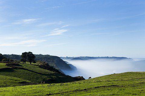 Vacas costeras. Luces. Asturias
