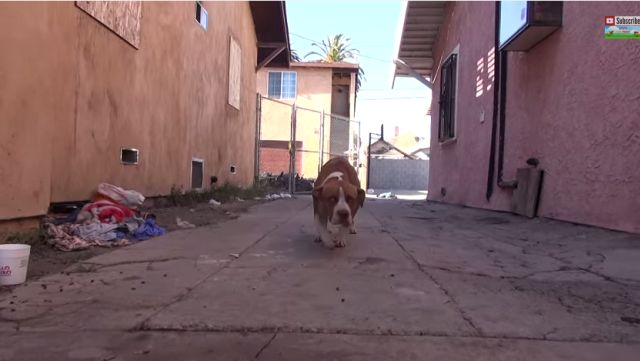 After a fire ripped his life apart, this abandoned pit bull has been looking second chance and a loving family. His new beginning starts today.