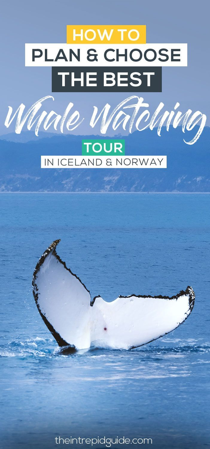 How to Choose the Best Whale Watching Tours in Iceland and