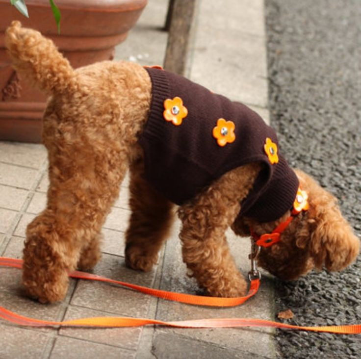 """Brown reflective cashmere pullover """"Mary Orange"""" for very small dogs from Herald & Ic la Chic. https://www.facebook.com/heraldandic"""