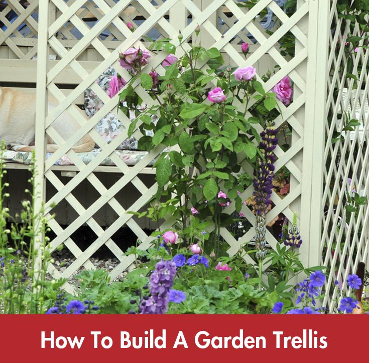 A garden trellis will enhance almost every style of home or garden and is perfect for supporting and displaying a great variety of flowering creepers.#Summer #DIY