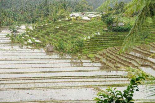 Villa Bulung Daya | Autour de la villa : Accueil VIP, Voiture de Location, 2 Téléphones et Excursions - Déjeunez en surplombant les rizières en terrasse à Belimbing. #bali #holidays #villa #indonesia