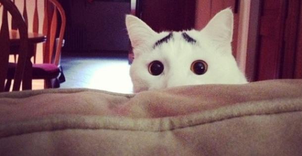 Maak kennis met Sam: De kat met wenkbrauwen