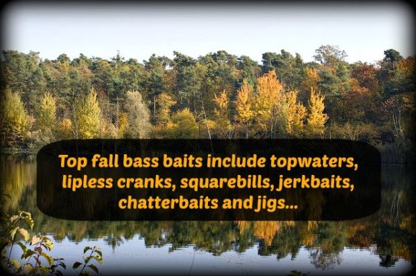 Favorite Fall Bass Baits